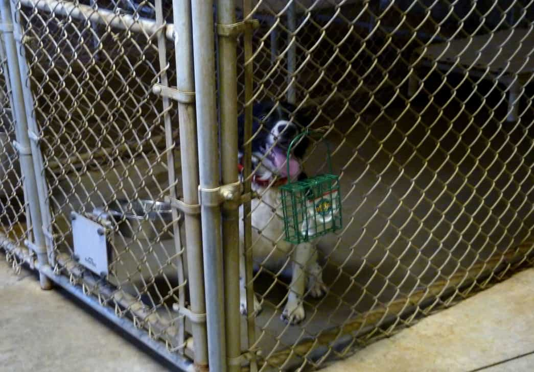 Keep Mice and Rats Out of Dog Kennel