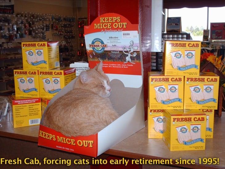CAT_in_FC_box_copy-1