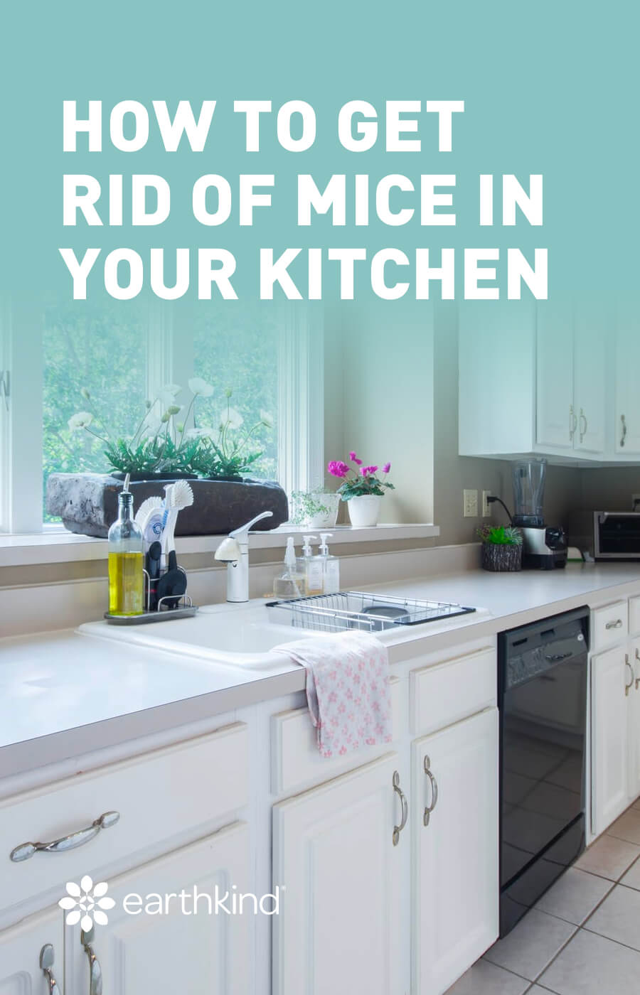 How to get rid of mice in the kitchen