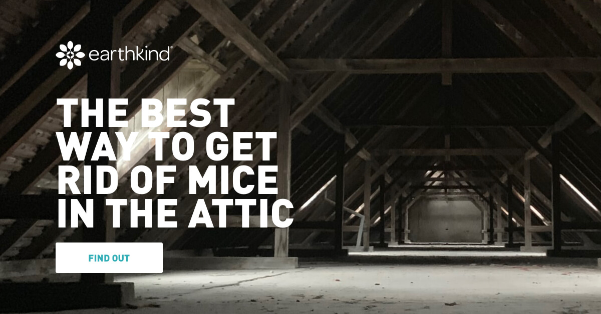 The Best Way To Get Rid Of Mice In The Attic Earthkind