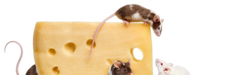 Do mice really like cheese: Fact or Fiction?