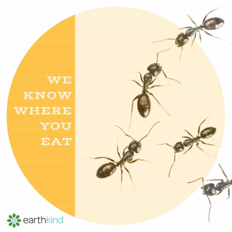 Ant_We_Know_Where_You_Eat