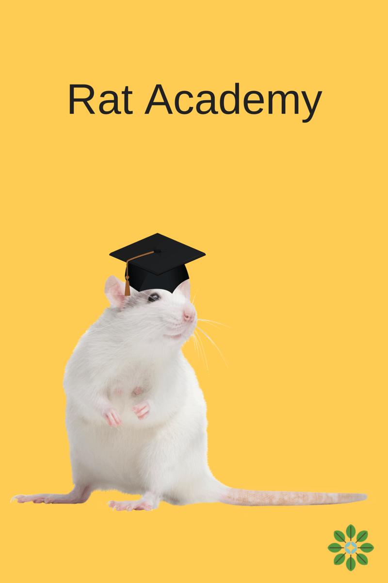 New_York_City_launches_aRat_Academy
