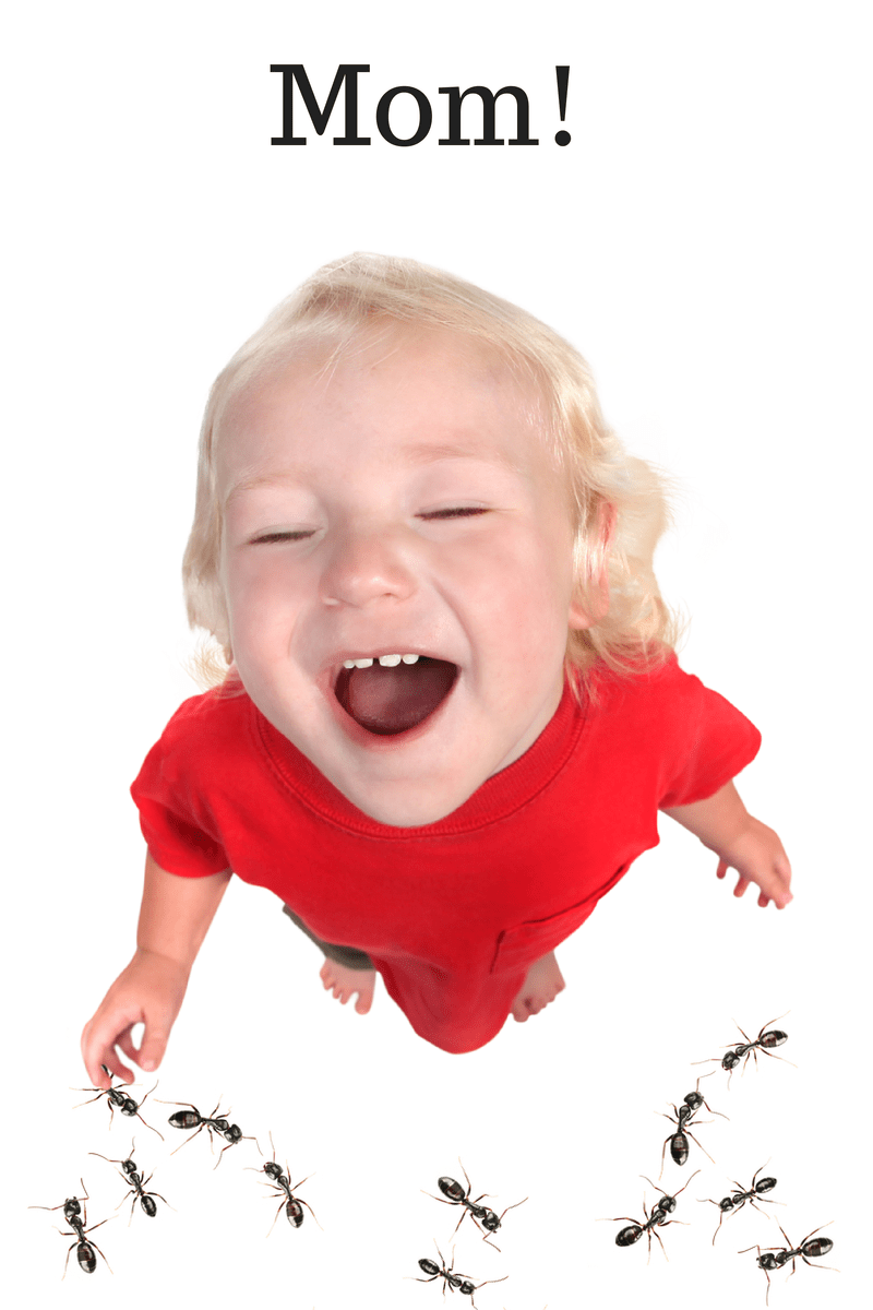 Ants_in_the_house-little_kid_(2)