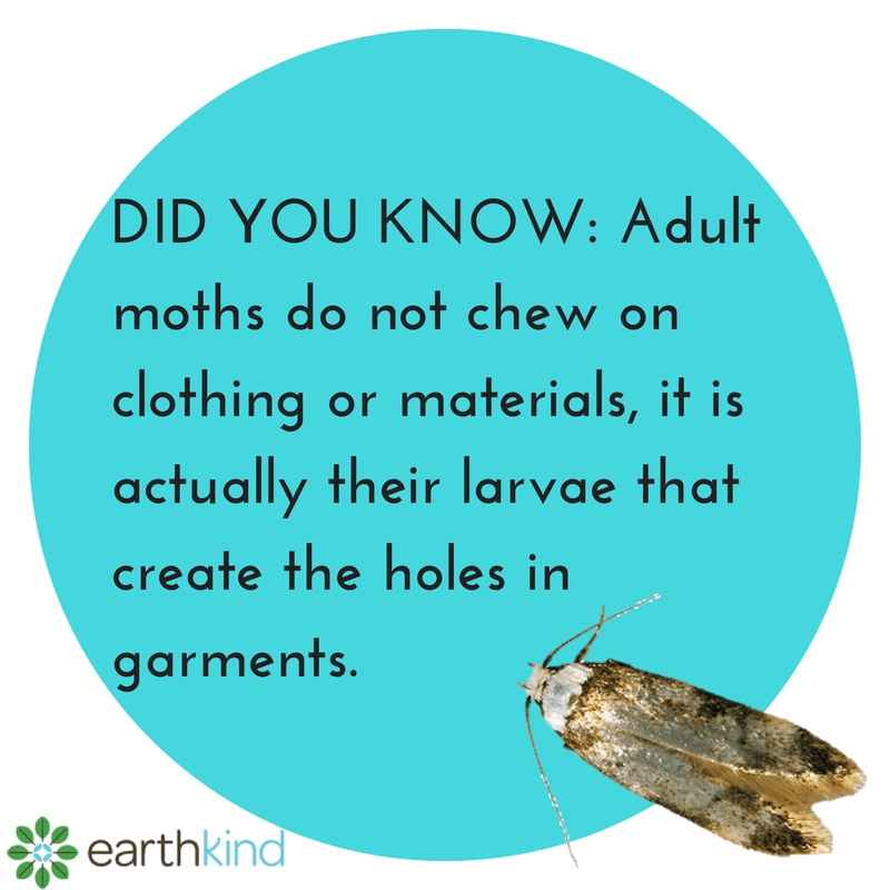 Adult_Moths_Do_Not_Eat