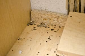 mice droppings