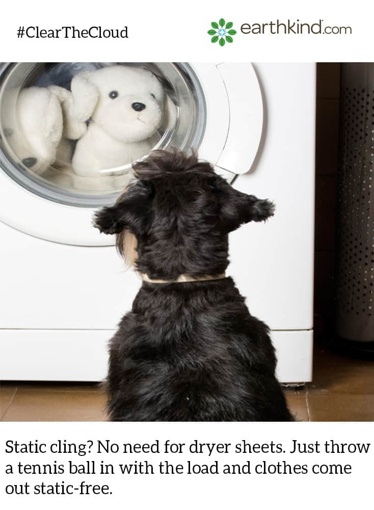 ClearTheCloud dog staring into dryer