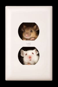 mice peeking through outlet holes
