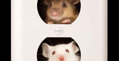 Proven Best Ways for Getting Rid of Mice