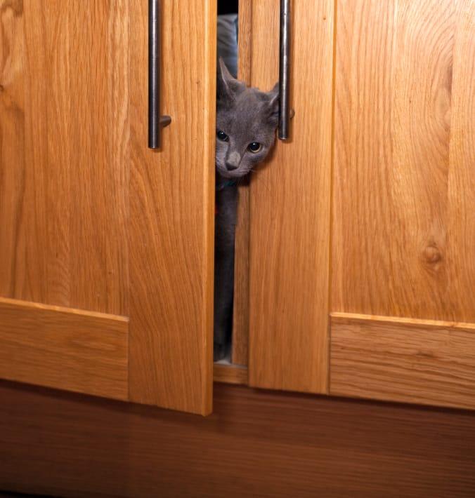 Cat_in_cupboard