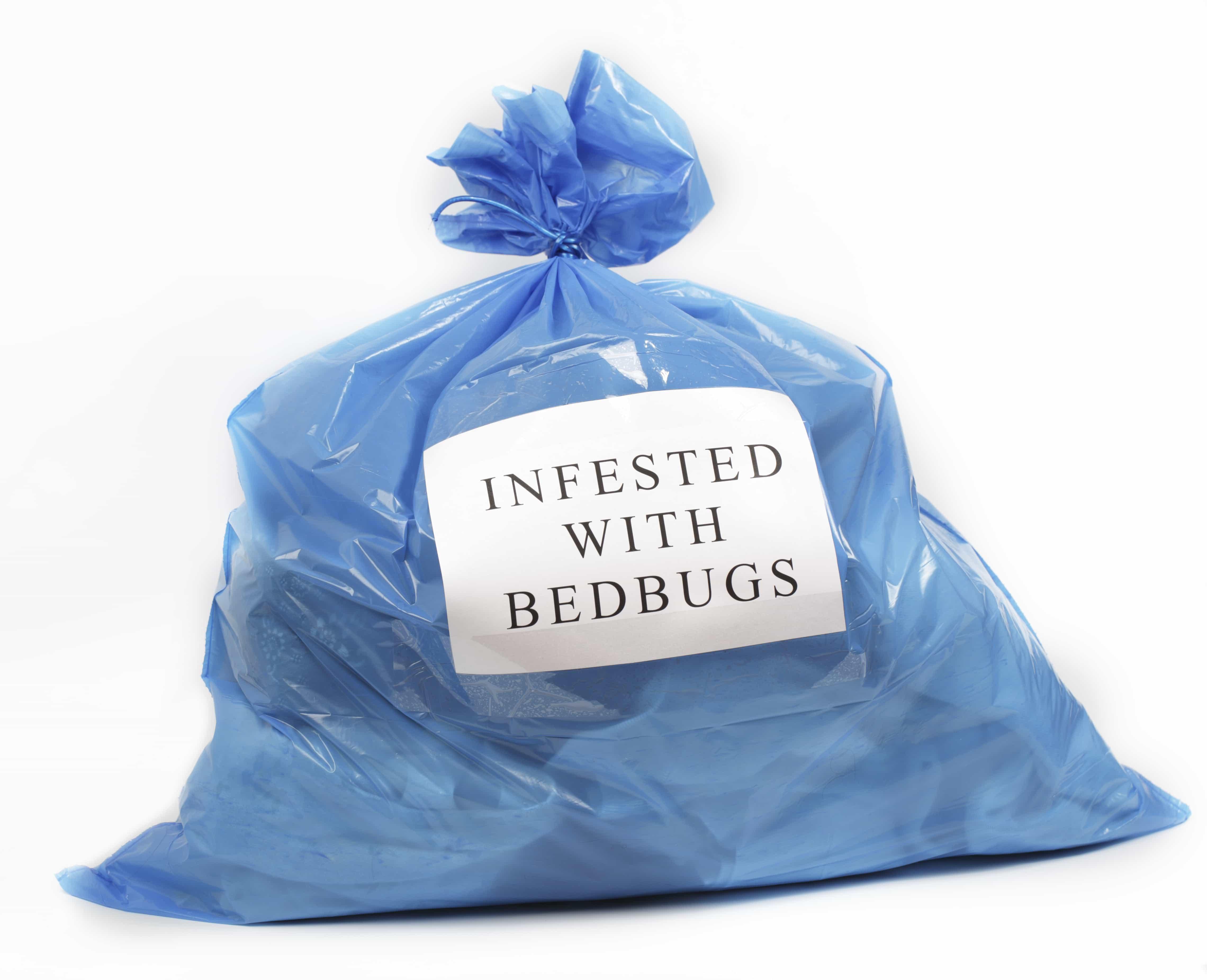 InfestedwithBedbugs