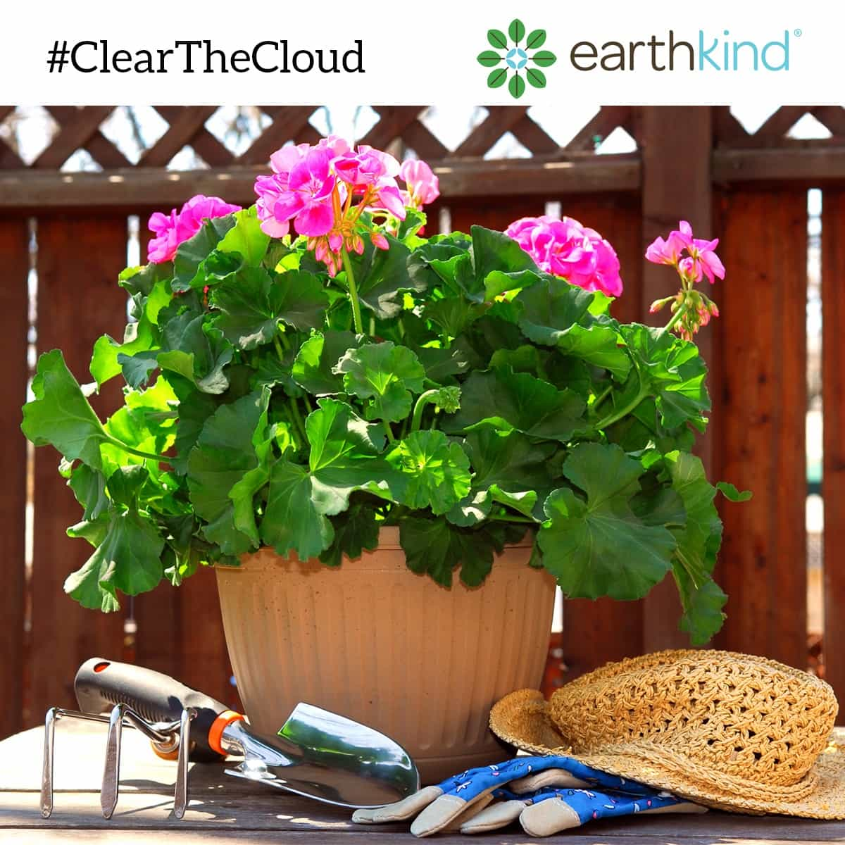 Plant flowers by your garden to attract insects and keep them out of your garden #ClearTheCloud, earthkind