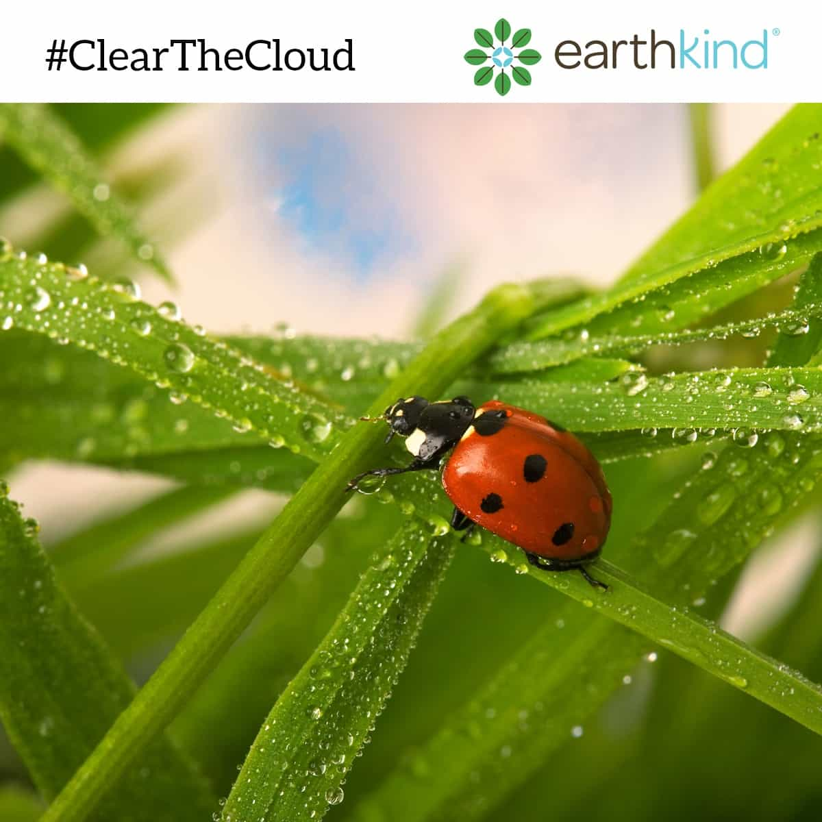 #ClearTheCloud with earthkind