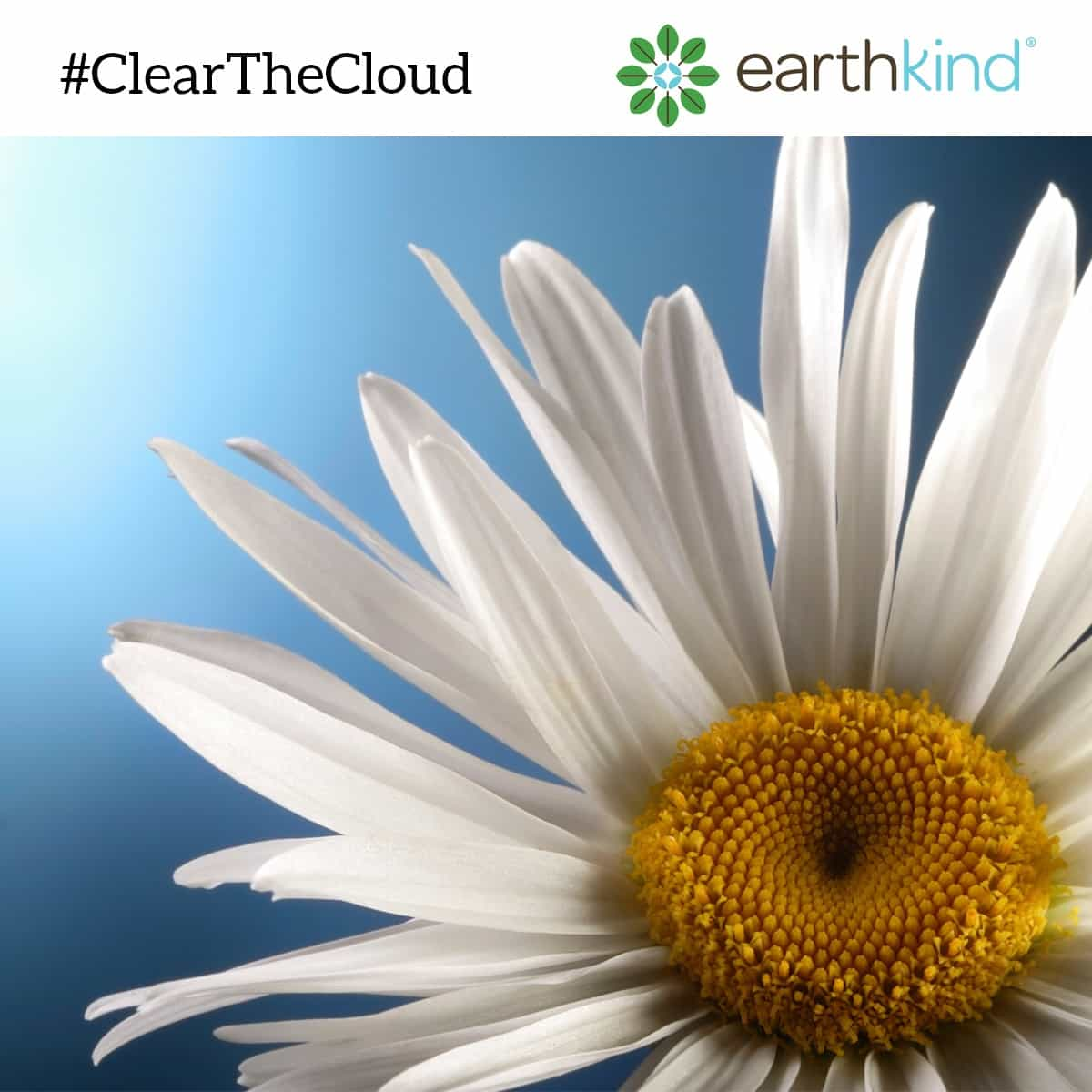 EarthKind Clear The Cloud Campaign Gives Tips to Rid Your Home of Chemicals