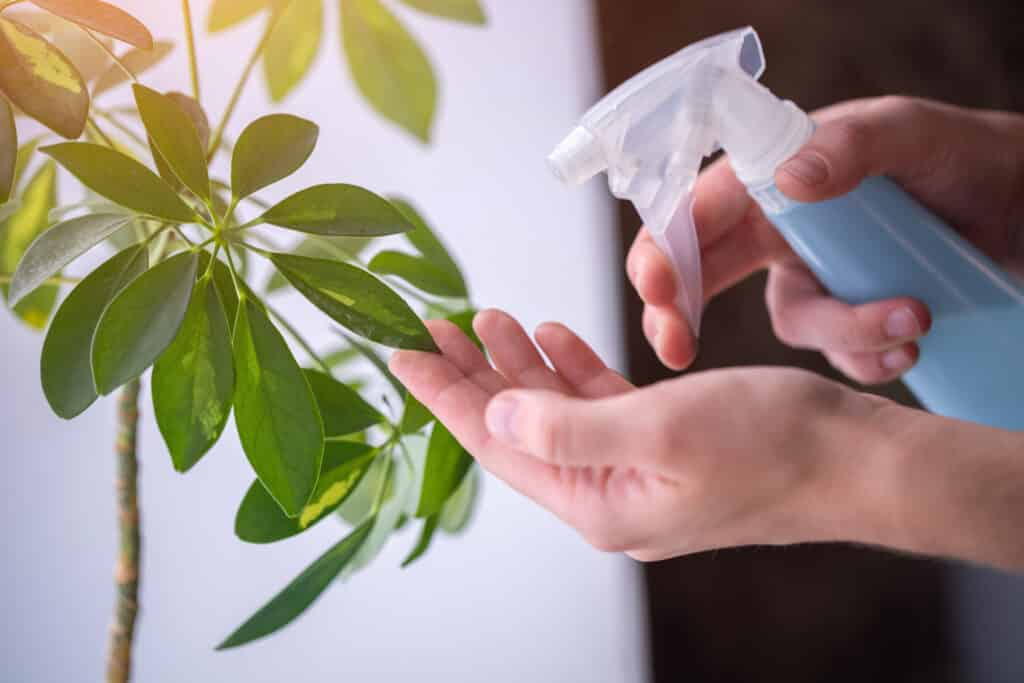 soap and water spray for plants