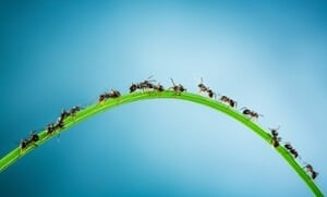 ants_teamwork_-_compressed.jpg