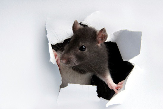 mouse_hole_wall_white