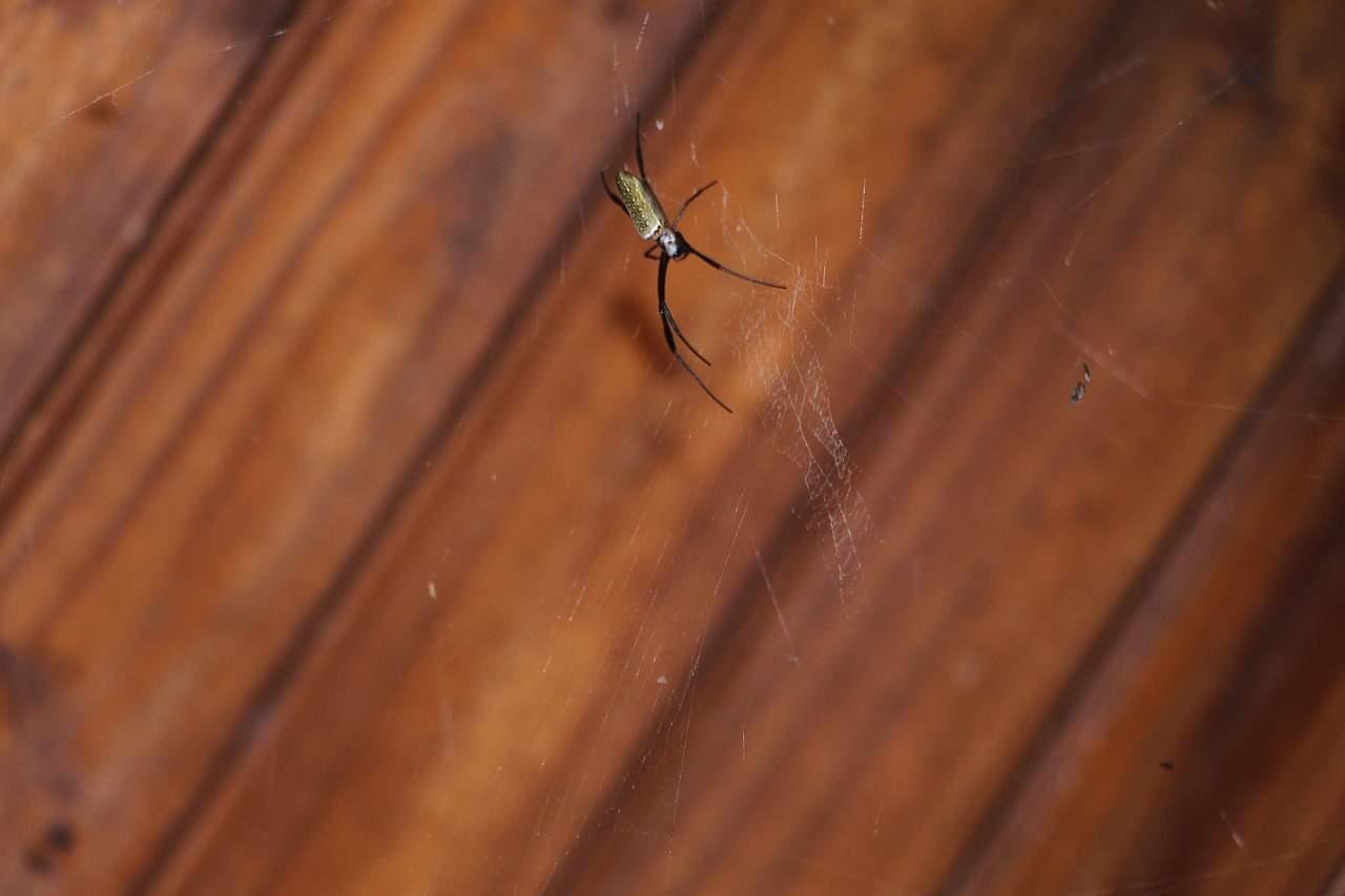 spider-706610_1280