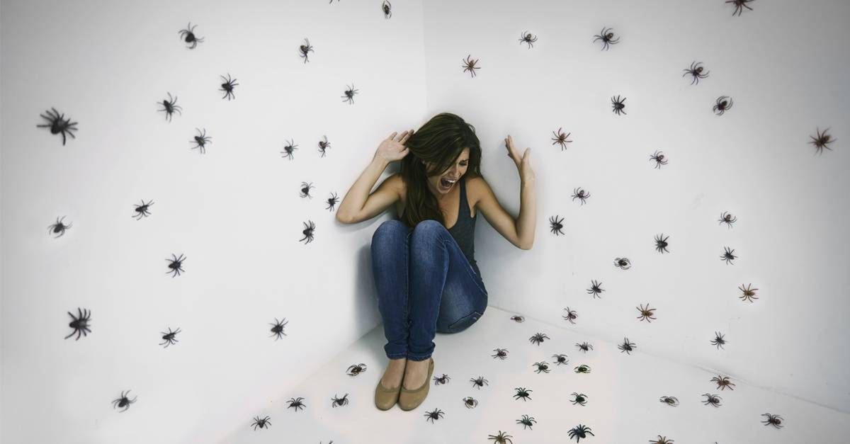 spiders_wall_woman_FB