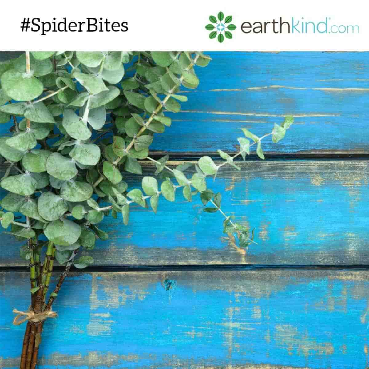 Use Eucalyptus Oil to Keep Spiders Out
