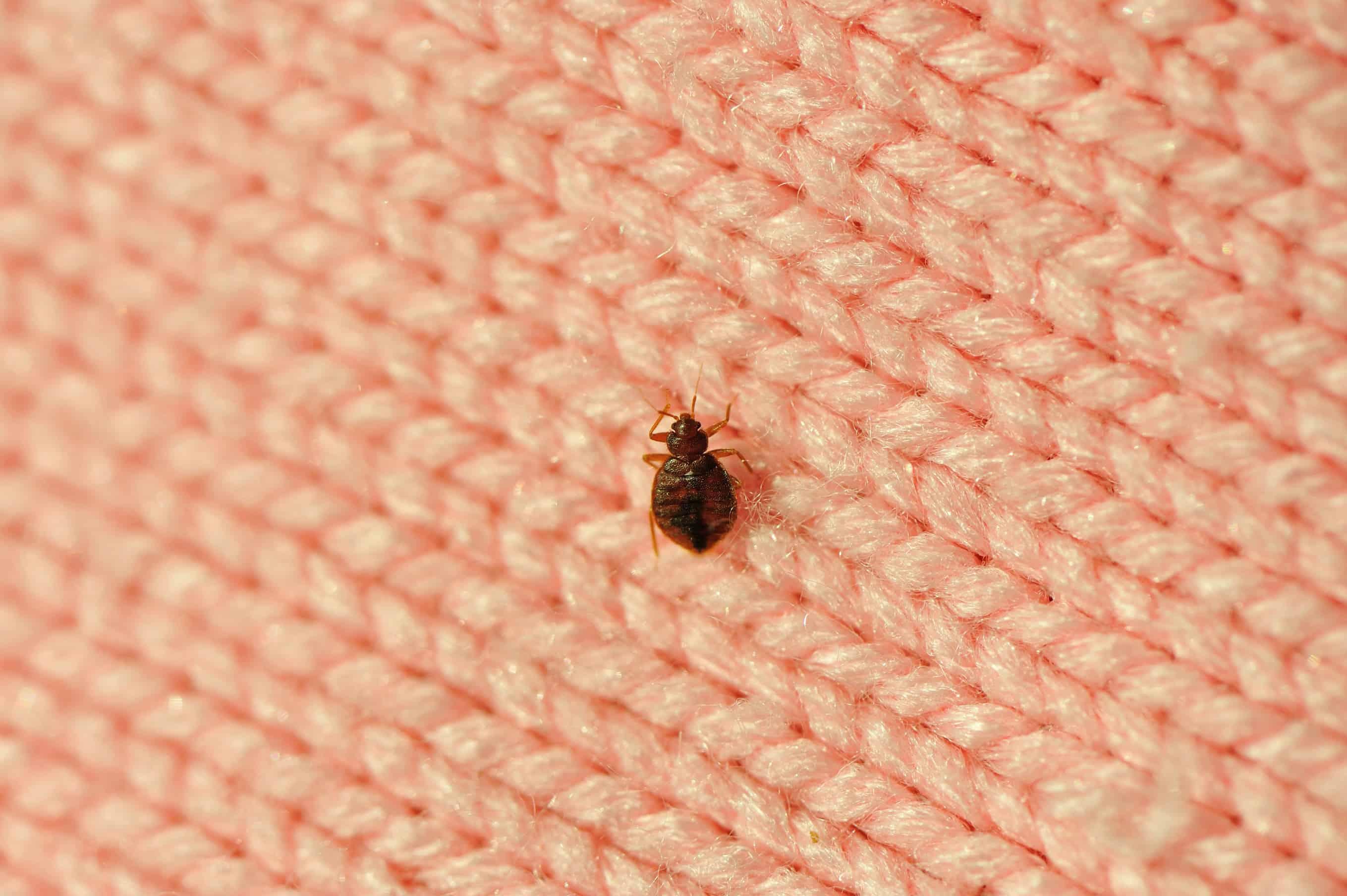 earthkind_bed_bugs
