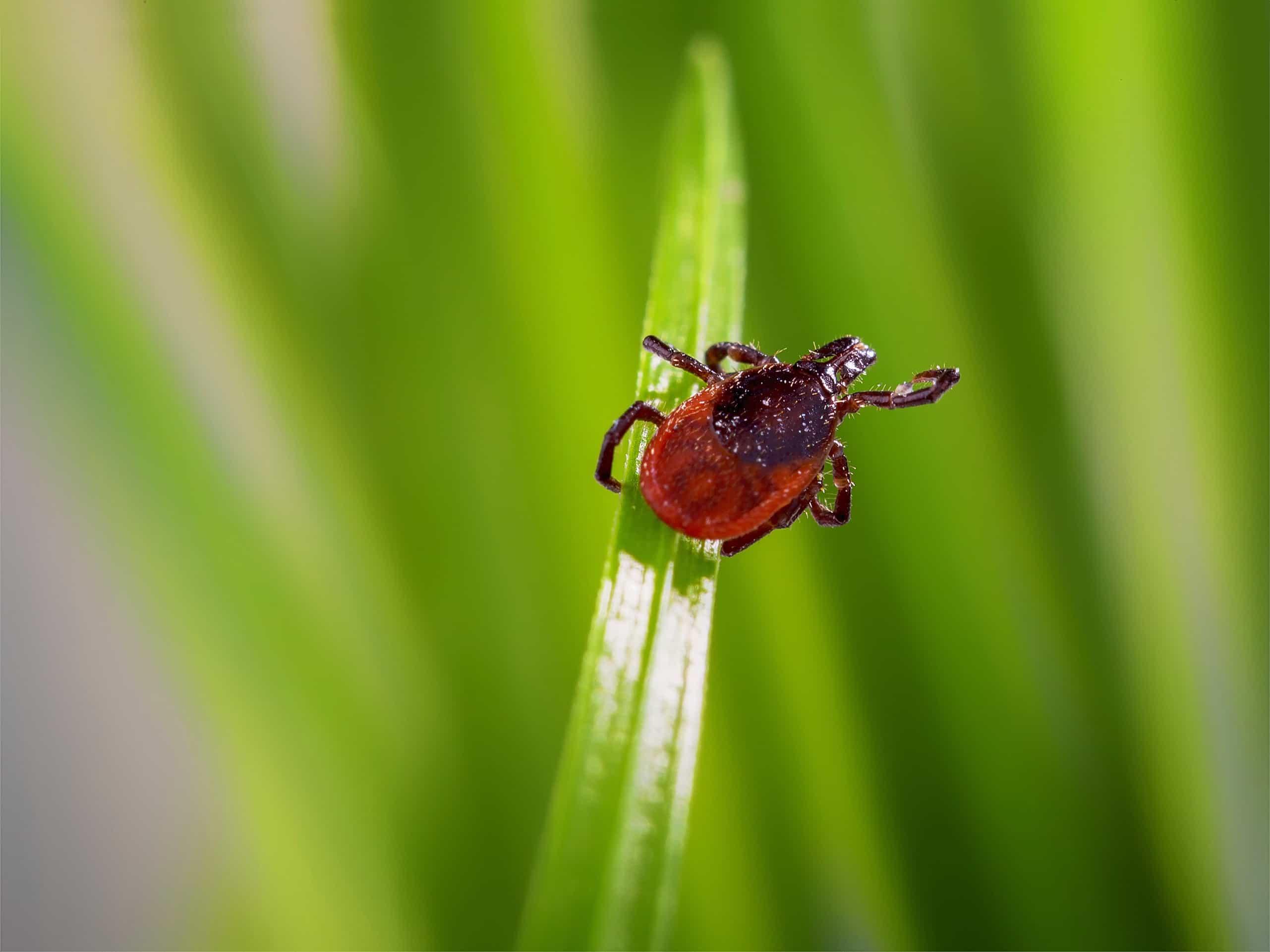 Pest_Repellent