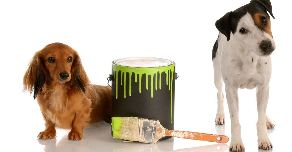 dogs_paint_FB
