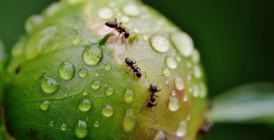 Ants in the kitchen, and how to get rid of them!