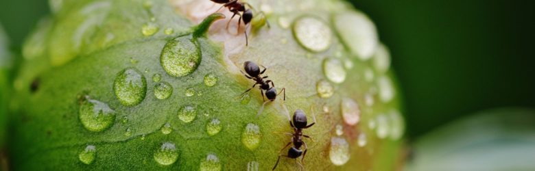 Ant Life Cycle – Exploring the Different Stages of an Ant's Life