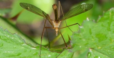 Pest of the Month:  The Mosquito — How to Protect yourself from the World's Most Dangerous Insect
