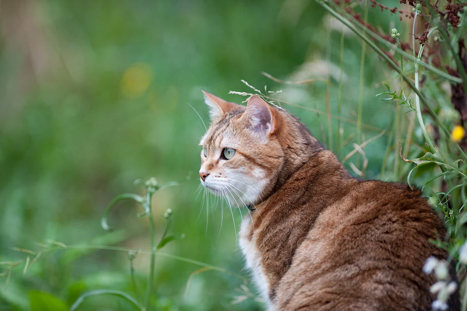 Protect your cat from outdoor pests