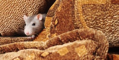 3 Ways to Stop Pest Infestations After Natural Disasters