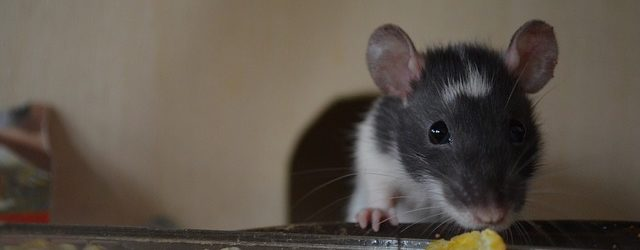 The Top 5 Reasons Mice Move into RV's, and How to Prevent it from Happening to You!