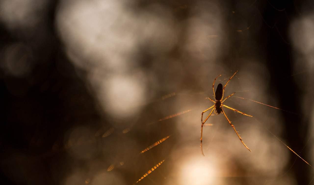 spider-379066_1280.jpg