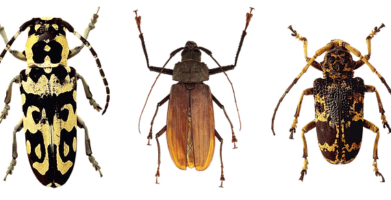 Different Types of Beetles & How to Identify Them