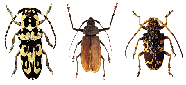 3-beetles-row.png