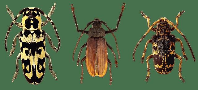 3-beetles-row.png