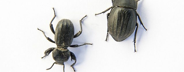 What Do Beetles Eat Around Your Home & Outside?