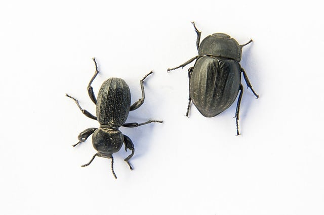 beetle-side-by-side.jpg