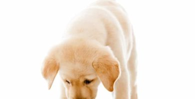 Pantry Moths in Dog Food & Other Pet Food – What to Do