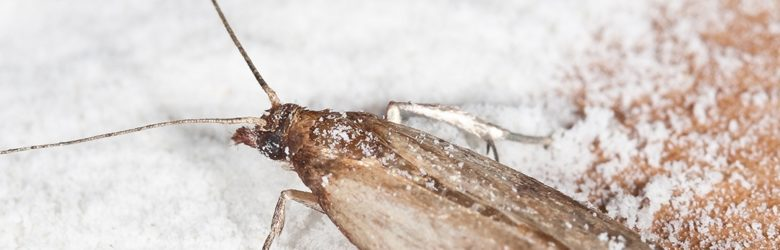 How to Get Rid of Pantry Moths Naturally – Tips & Advice