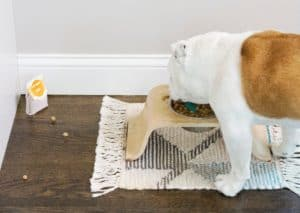 Stay Away Ants_dog_eating_pet_food