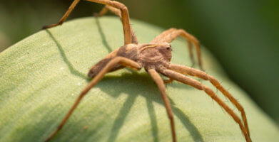 Common House Spiders: Identification & Facts