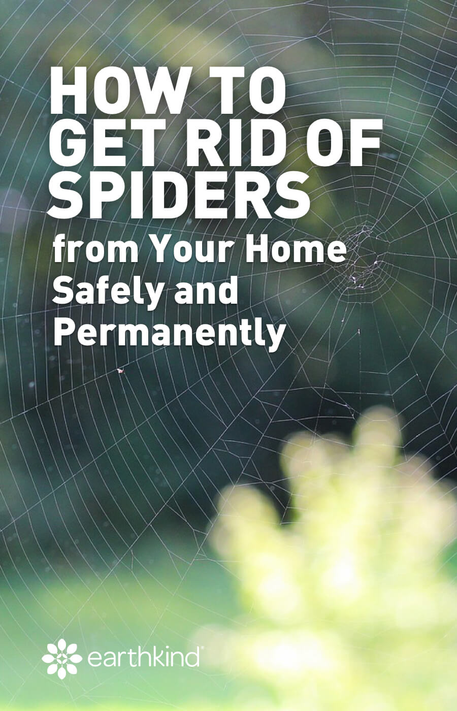 Tips for getting rid of spiders in the house