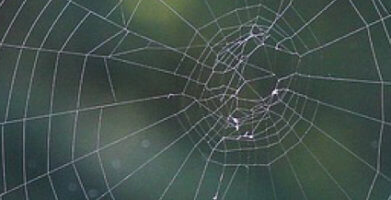 How to Get Rid of Spiders at Home Safely and Permanently