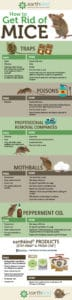 How to get rid of mice using different methods