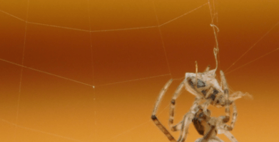 Why are Spiders Important and What's Their Purpose?