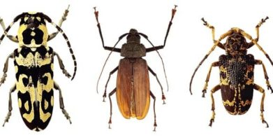Cockroaches vs. Beetles – Which one is in your home?