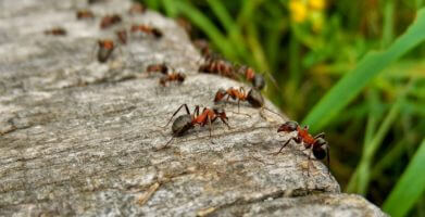 Ant Habitat – Where Do Ants Live in Your House and in the World