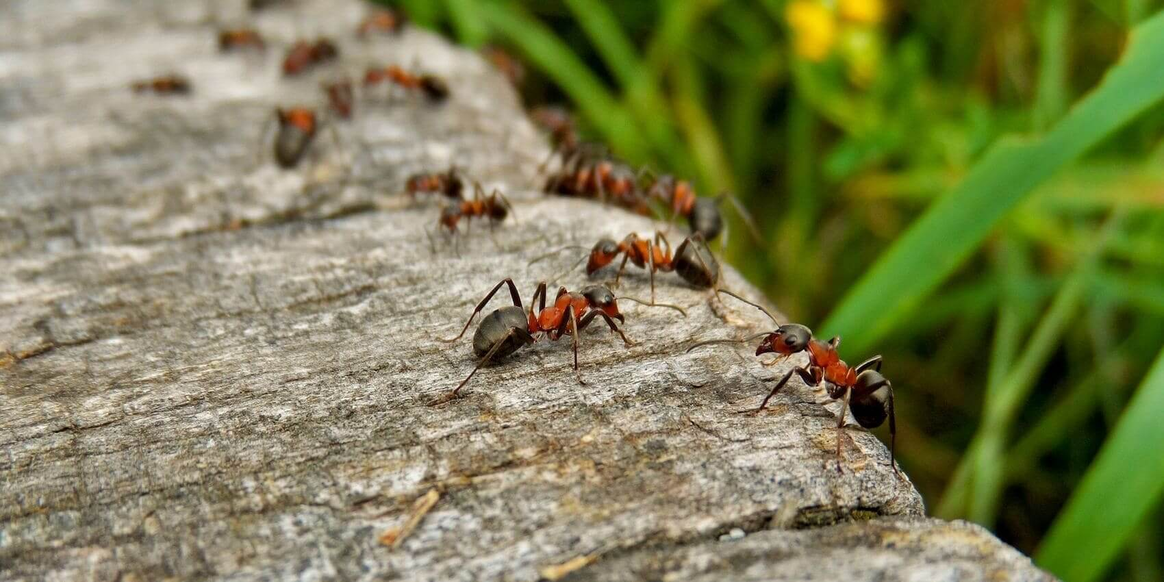 Ant Habitat Where Do Ants Live In Your House And In The World